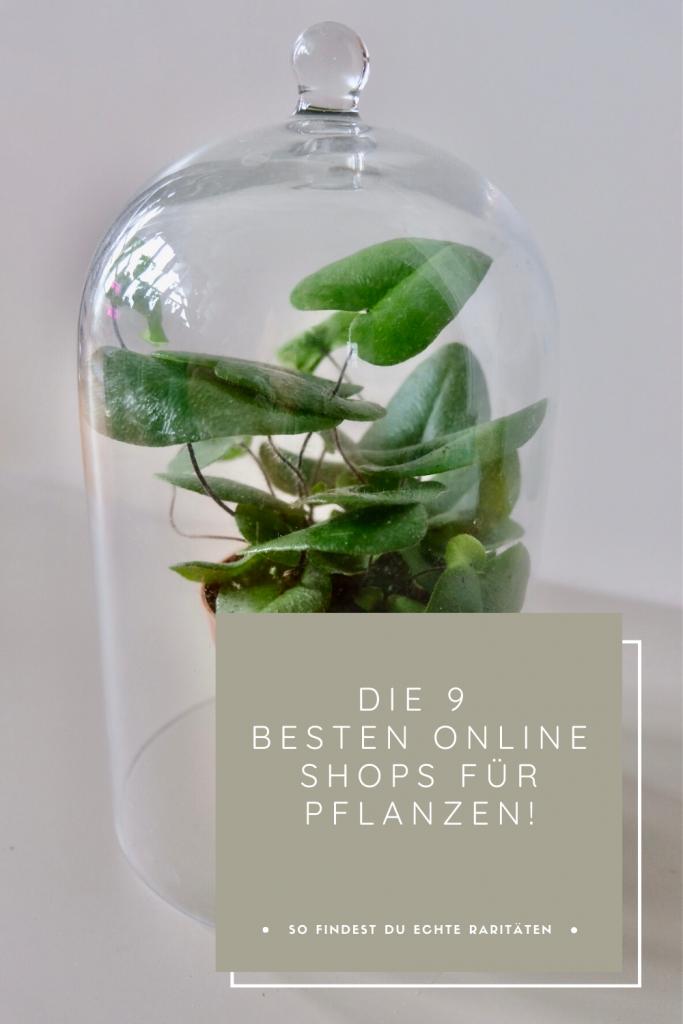 Die 9 besten Online Shops für Pflanzen